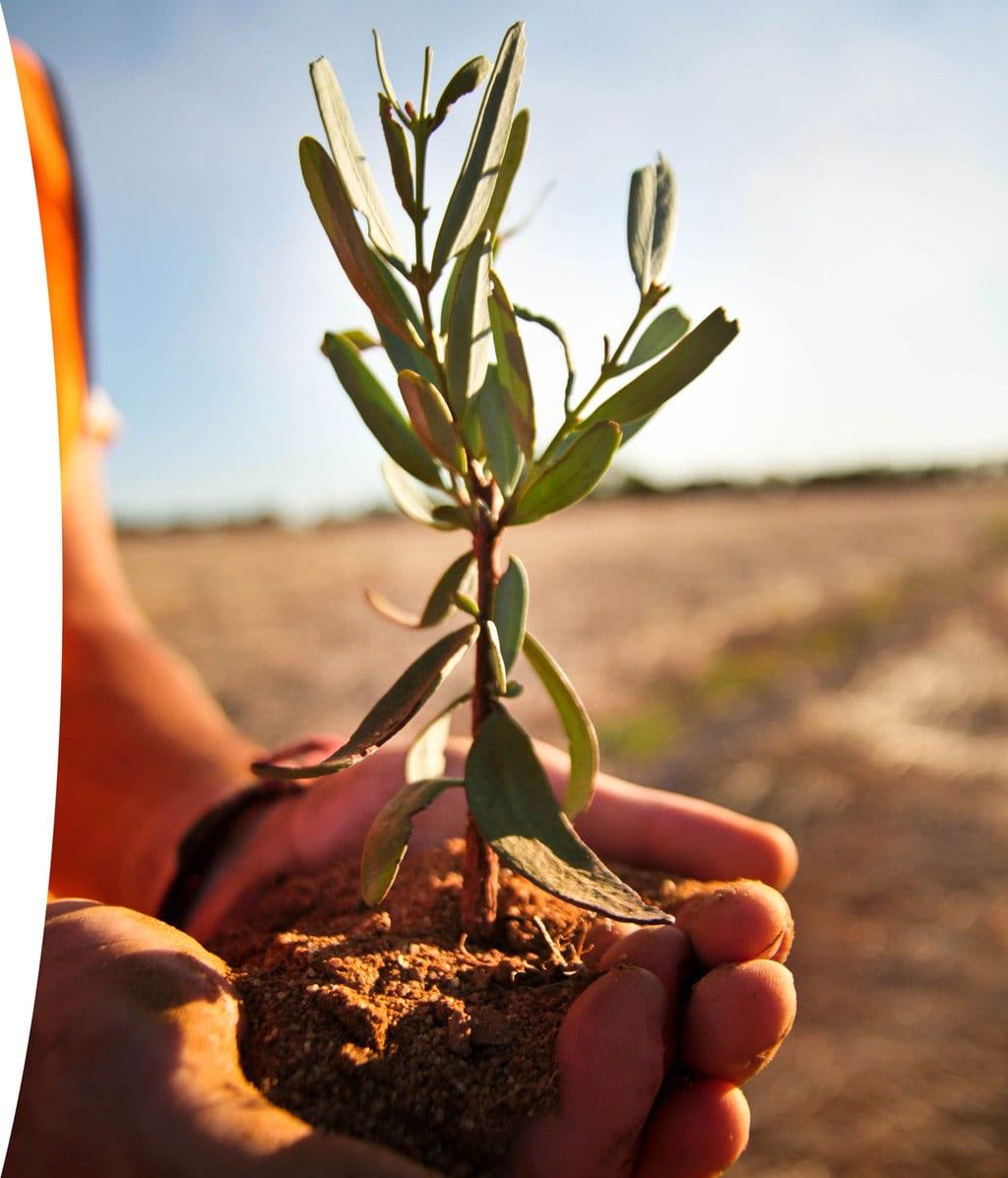 Carbon Neutral Plant A Tree Program